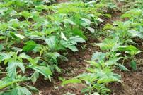 【オーガニック美容・用語集】バイオダイナミック農法とは