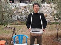 日本初のオーガニックオリーヴ栽培を成功した小豆島の山田オリーブ園からオリーヴオイルが誕生